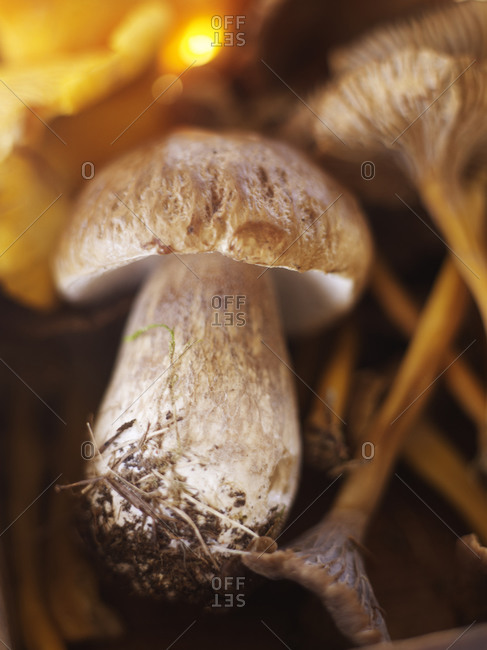 Close up of edible mushrooms abundance