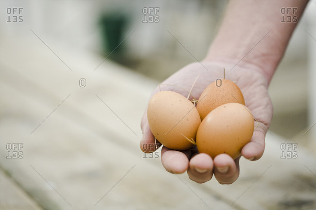 Man holding eggs in his hands