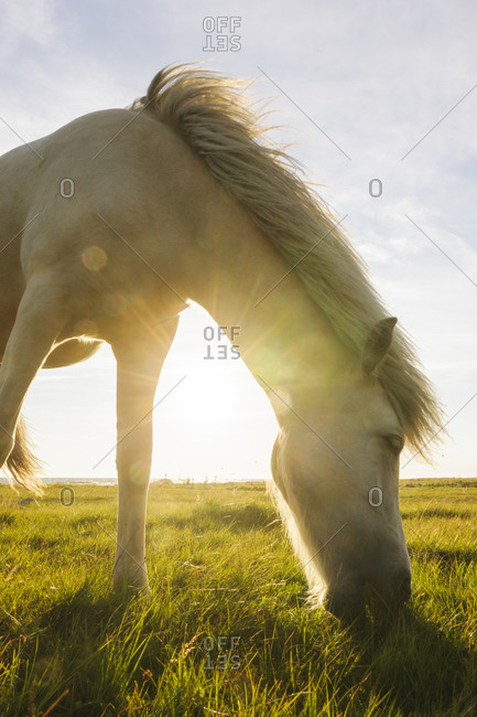 Horse grazing at evening up