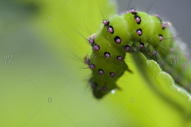 Close up of green Caterpillar