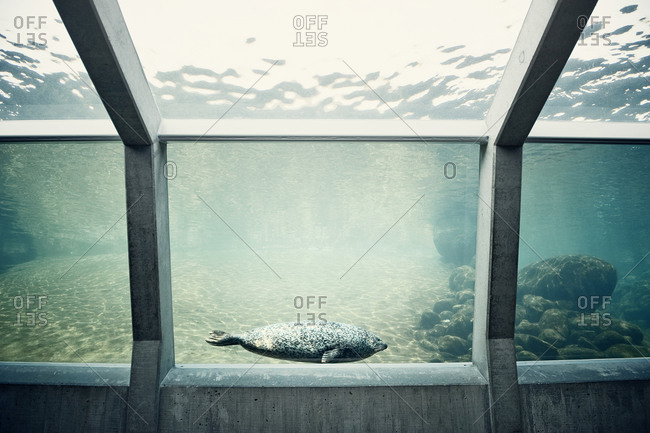 Seals in aquarium