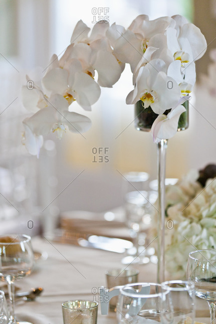 Orchid flower centerpiece