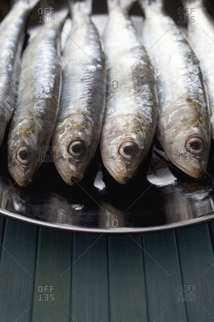 A plate of fresh sardines