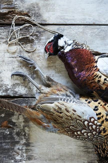 Pair of Dead Pheasants