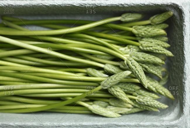 Green wild asparagus in a cardboard carton