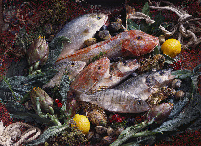 Still life with fish, shellfish and vegetables