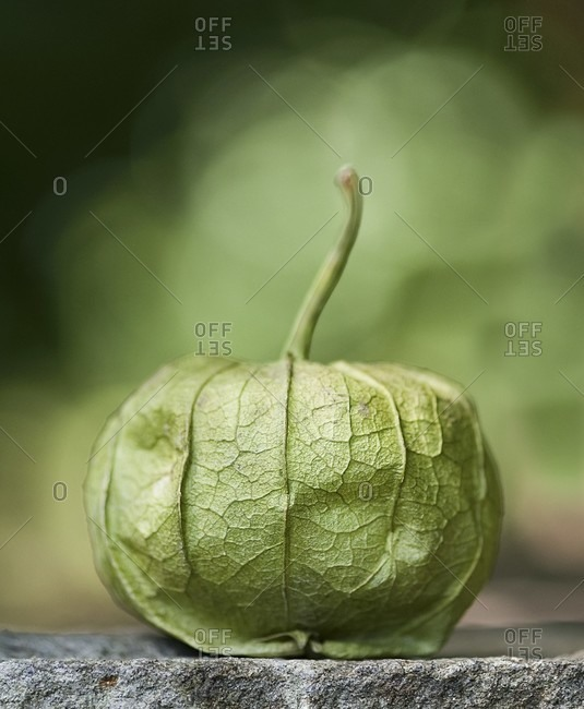 A Single Whole Tomatillo with a Stem