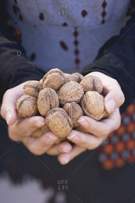 Close up of a woman's hands holding walnuts