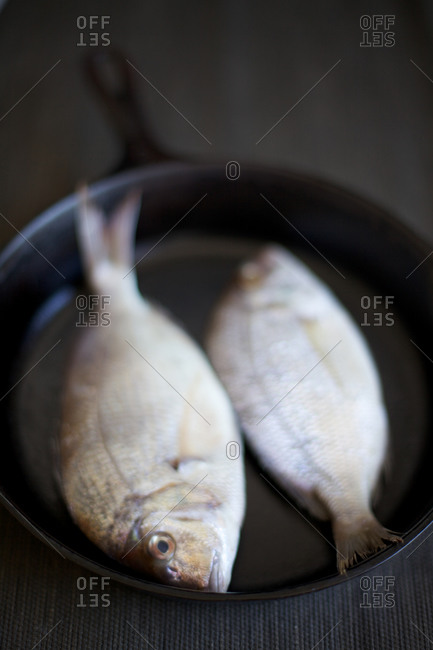 Pair of fresh flounders on a skillet