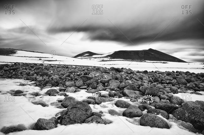 Barren and desolate landscape in Antarctica