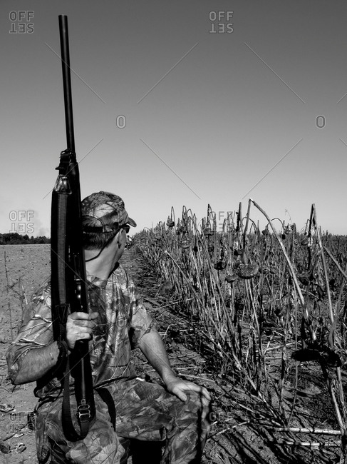 Dove hunt near field