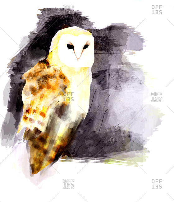 A barn owl against a purple textured background