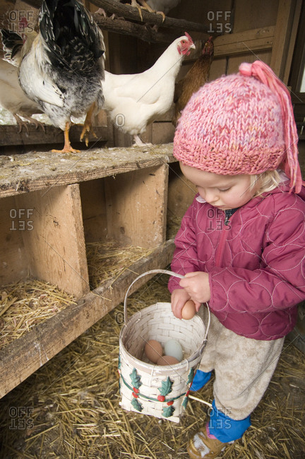 Young girl gathering fresh chicken eggs, Burnsville, North Carolina