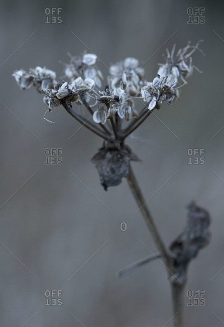 Close up of wilted flower