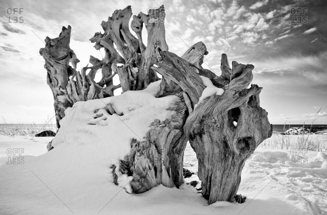 Picturesque driftwood on Hokkaido island, Japan