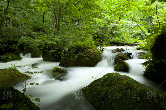 Mountain stream flowing in OiraseRiver area, Aomori Prefecture, Japan