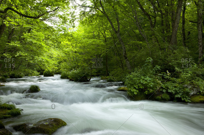 Mountain stream flowing in forest in the Oirase River area, Aomori Prefecture, Japan