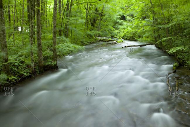 Flowing mountain stream in the Oirase River area, Aomori Prefecture, Japan