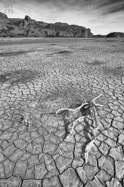 Dried branch at Arid Riverbed in Patagonia, Argentina