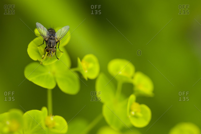 Close up of small fly on green leaves