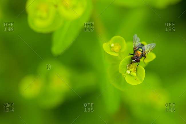 Small fly on green leaf from above