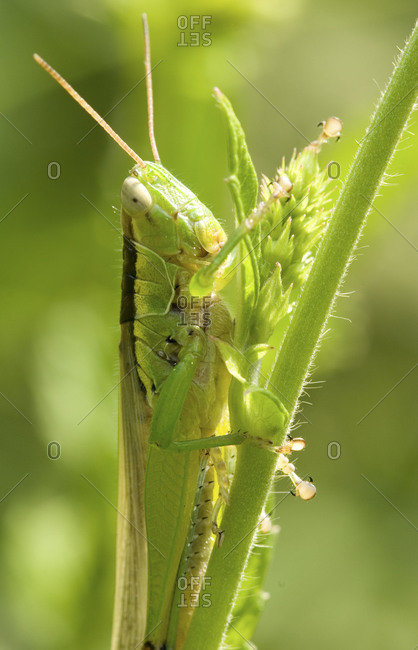 Portrait of grasshopper sitting on green plant