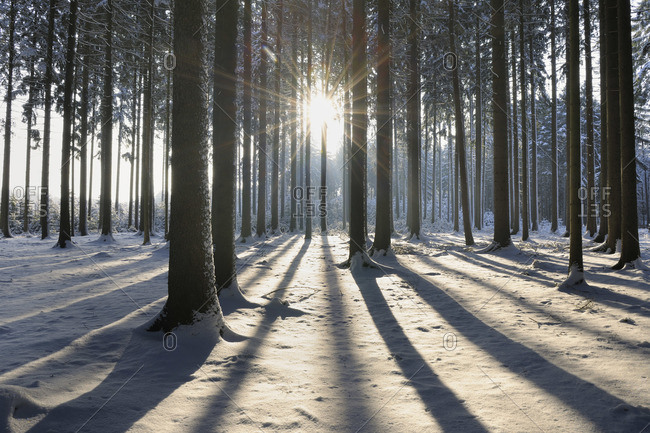 Forest in Winter, Odenwald, Hesse, Germany