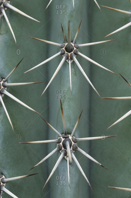Close-up of Cactus - Offset Collection