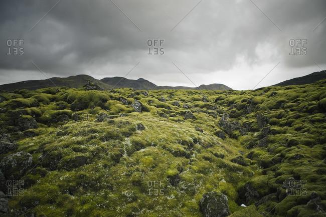 Moss over Lava Field, Hellisheidi, Iceland