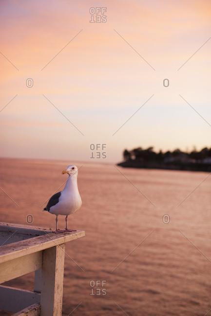 Seagull on Pier, Santa Cruz, California, USA
