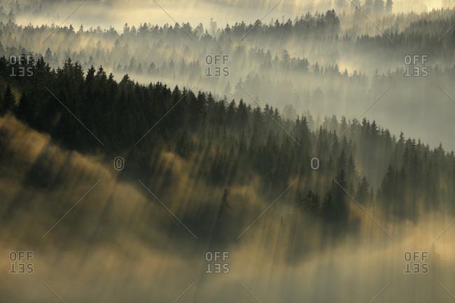 Forests, Harz National Park, Harz, Lower Saxony, Germany
