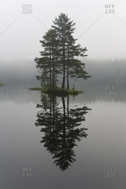 Reflection of Tree in Lake, Telemark County, Eastern Norway, Norway