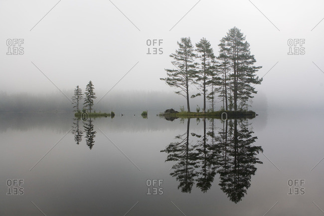 Reflection of Tree in Lake, Telemark, Eastern Norway, Norway