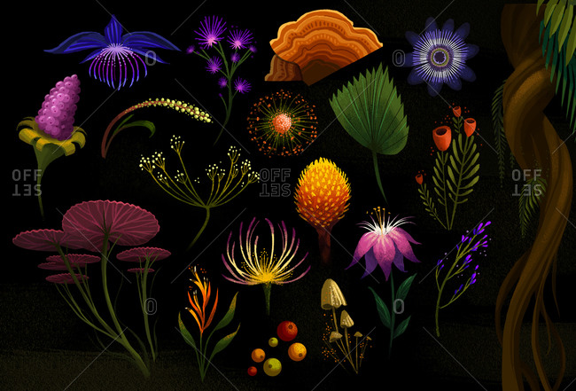 Explorations of different exotic herbs and plants of the rainforest