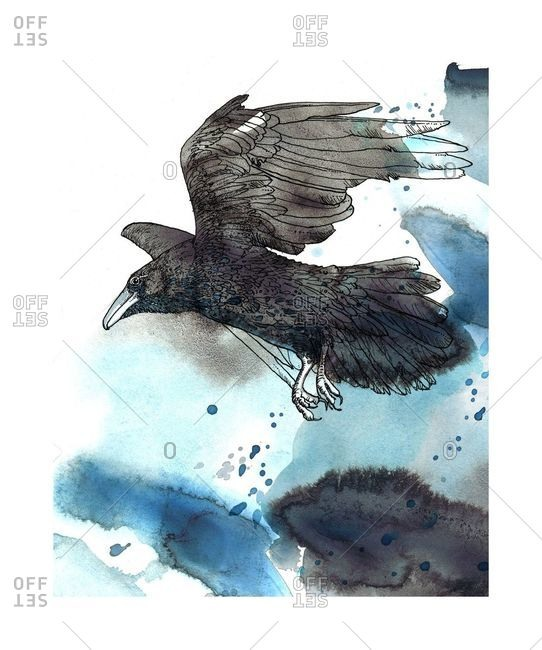 Line drawing of one crow flying on a blue background