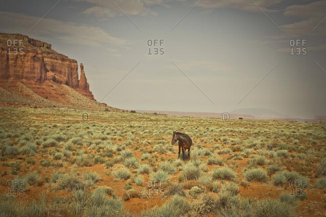 Horse on Douglas Mesa Trail, Monument Valley, Utah, USA