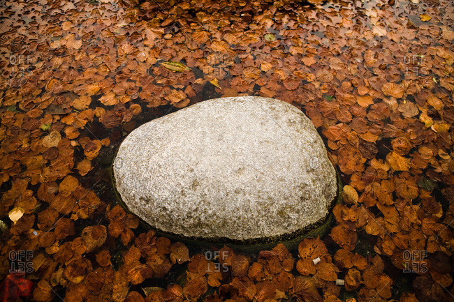 Rock with autumn leaves