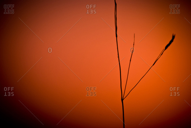 Straw and red background