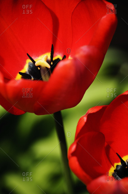 Closeup on red flower