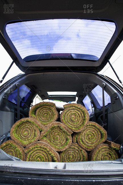 Rolled turfs stacked in car trunk
