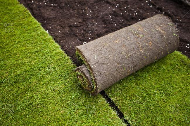 Rolled grass turf in formal garden