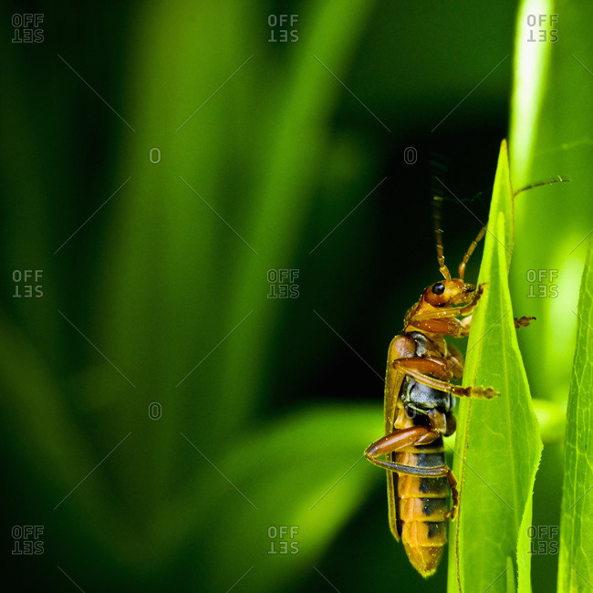 Insect on grass straw