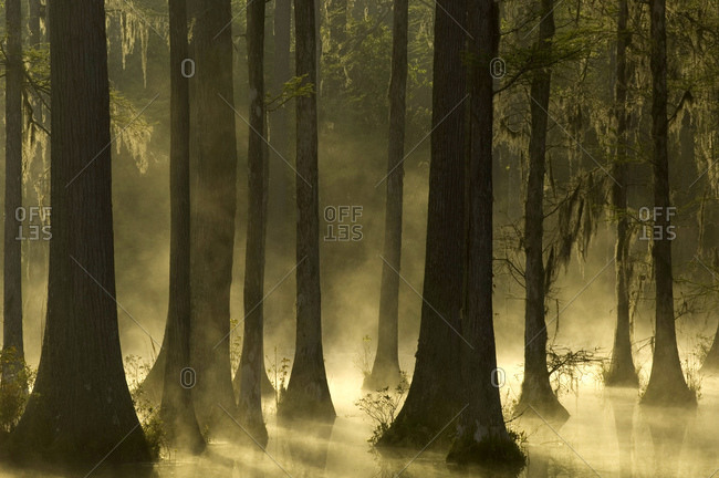 Trees in water with mist