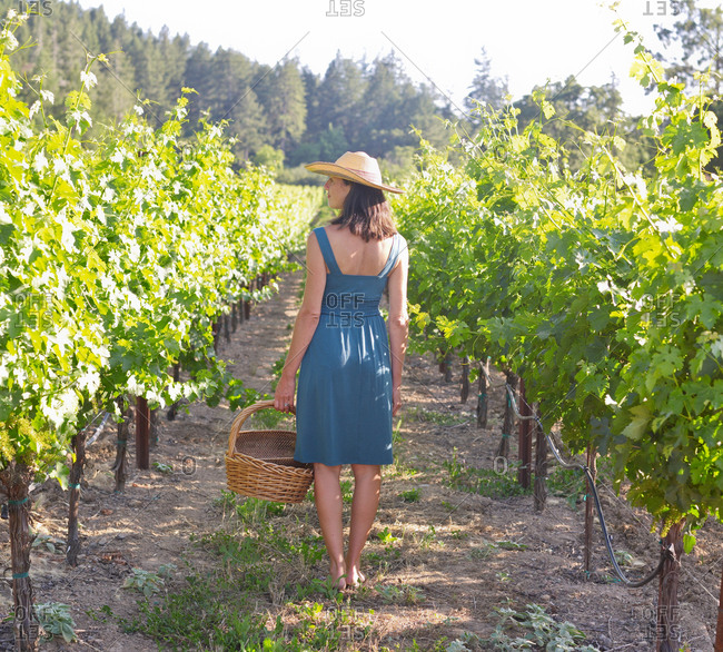 A woman in straw hat standing among vine rows with a wicker basket