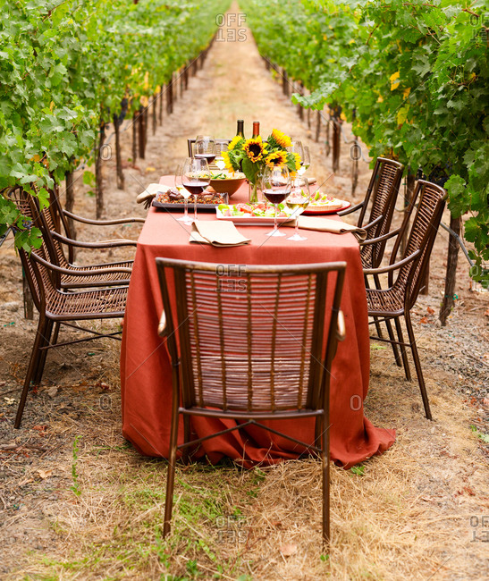 Picnic in the beautiful vineyard in fall