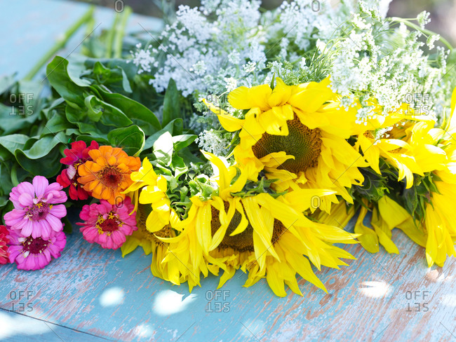 Colorful zinnia flowers and sunflower lying on a wooden surface