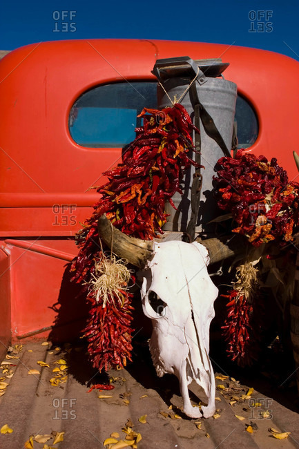 Strings of dried chiles and a cow skull sit in the back of a truck