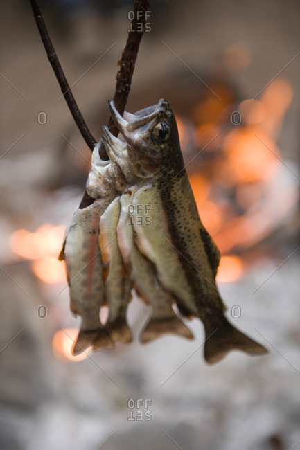 Fish cooking over a fire in Kings Canyon National Park, CA