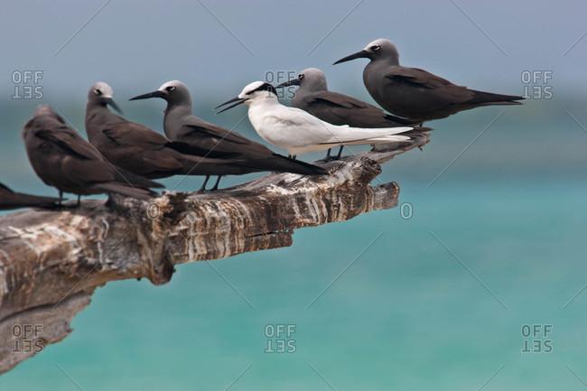 Seabirds line a piece of wood near the ocean
