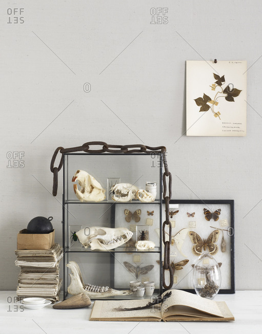 Animal skulls, an insect collection and d_cor on a table